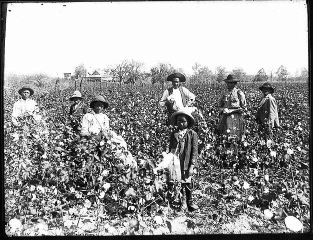 626px-black_cotton_farming_family