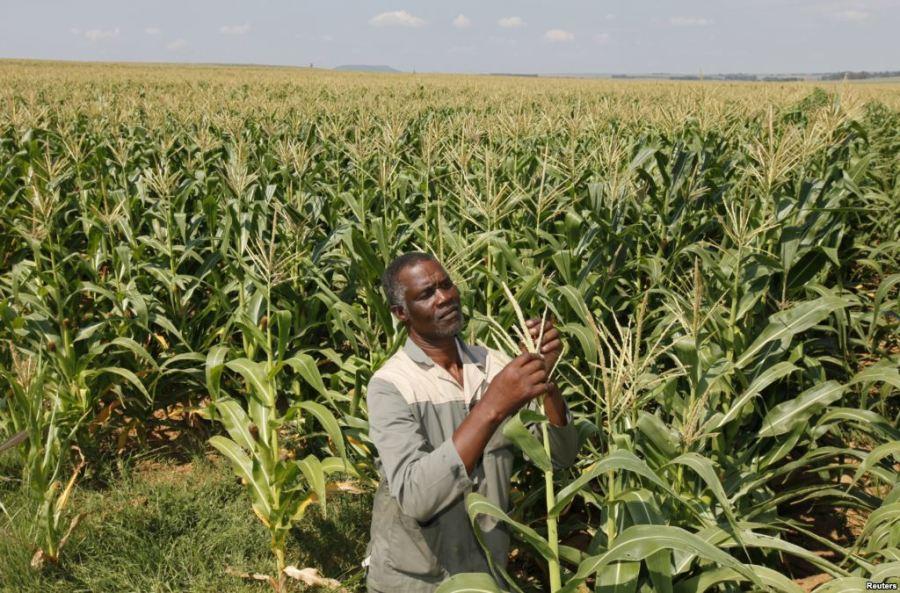 black-agriculture